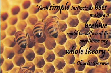 charles darwin quote 1 bee pic